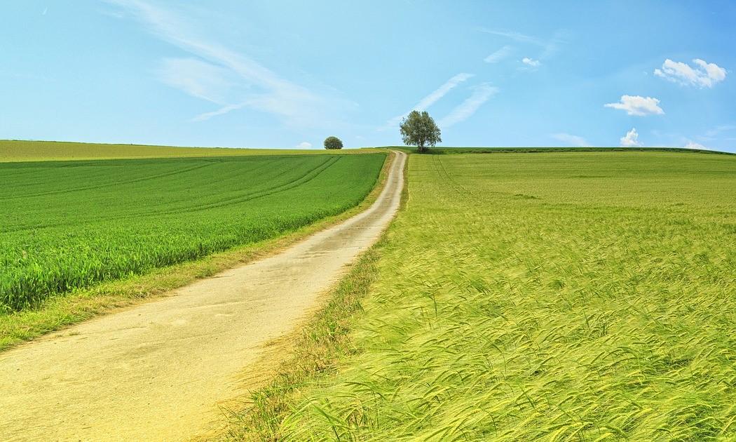 Acciones Para Construir Plantas Fotovoltaicas De Impacto Ambiental Positivo