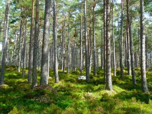 Reforestación bosques