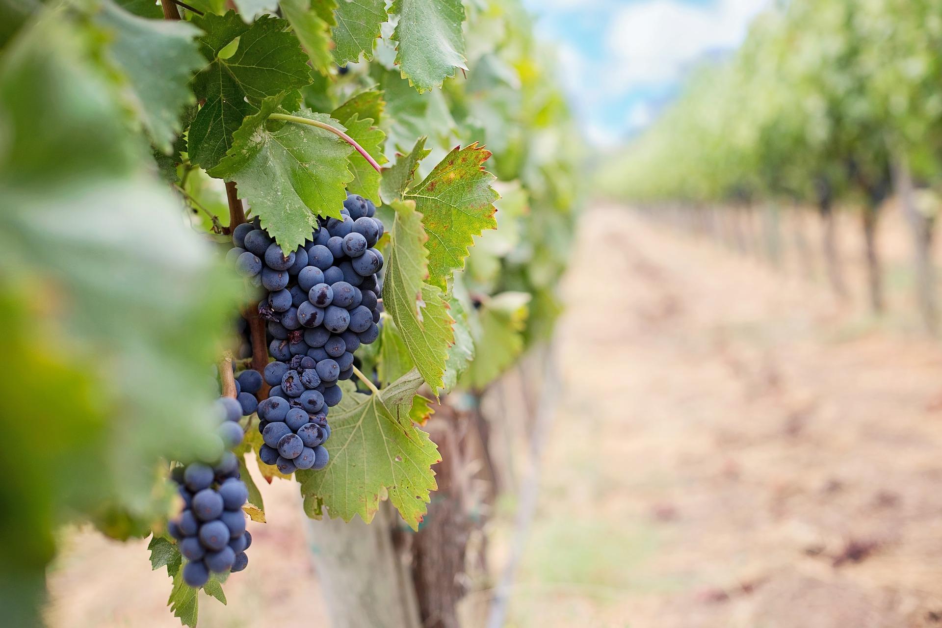 Isemaren Desarrolla Una Herramienta Que Ayuda A Las Bodegas A Obtener El Certificado Wineries For Climate Protection